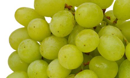 Szépen szóló szőlő